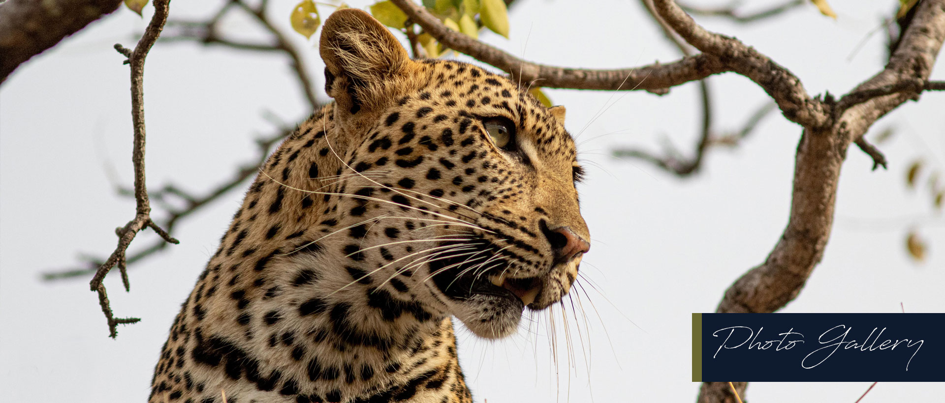 Game Drive specials in Hoedspruit